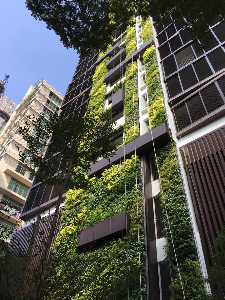 green-wall-at-gaia-condo